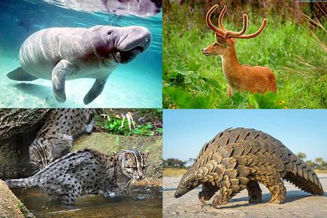 Quatre espèces peu connues mais menacées d'extinction en Inde | Biodiversité & Relations Homme - Nature - Environnement : Un Scoop.it du Muséum de Toulouse | Scoop.it