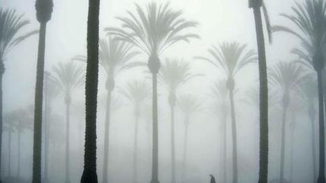 [Video] Les palmiers du sud de la France sont-ils en voie de disparition ? | Environnement et développement durable en Languedoc Roussillon | Scoop.it