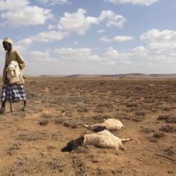 U.N. warns of 'race against time' for 23 million drought-stricken... | Understanding Water | Scoop.it