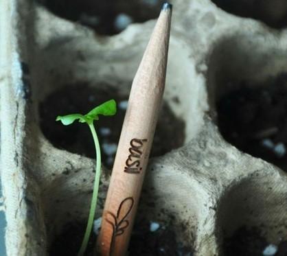 Les Insolites: Le crayon qui se transforme en plante | wiki2d - Contribuons au développement durable en région Provence-Alpes-Côte d'Azur (PACA) | Développement durable & Environnement | Scoop.it