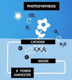 Des plantes pour produire de l'électricité | Innovations urbaines | Scoop.it