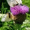 natural health & herbal remedies