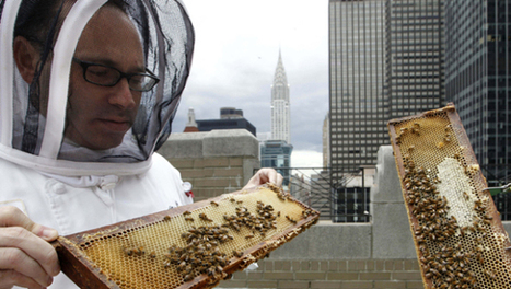 Urban beekeeping all the buzz among posh hotels - CBS News | forest gardening | Scoop.it