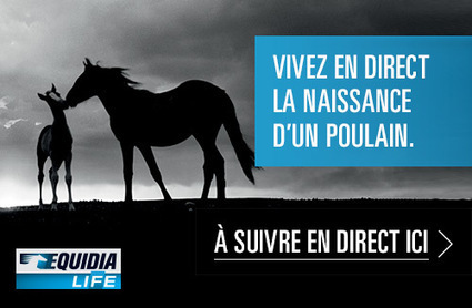 Equidia Life : un poulain est né en direct live | streetmarketing | Scoop.it