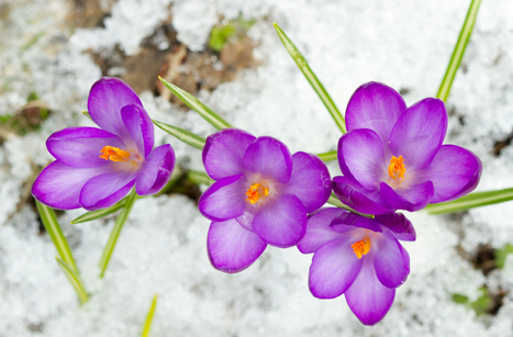 Protecting Plants From Frost - Garden Toolbox News | Gardening Galore | Scoop.it