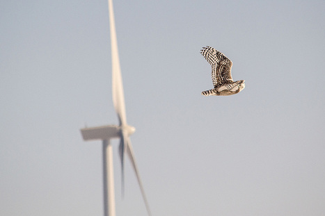 Wind Turbines With Owl Wings Could Silently Make Extra Energy
