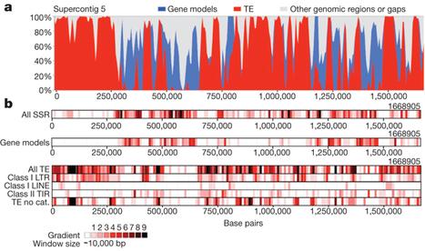 Perigord black truffle genome uncovers evolutionary origins and mechanisms of symbiosis | Mycorrhizal fungal genomes | Scoop.it