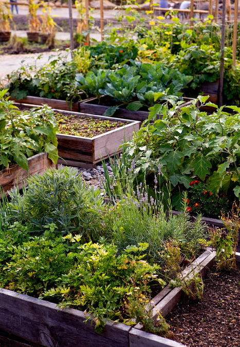 Moveable Feast: A Pop-Up Farm in Brooklyn: Gardenista | botany | Scoop.it