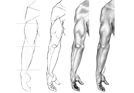 Anatomy Drawing In Drawing And Painting Tutorials