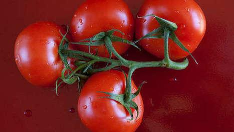 Des ONG s'attaquent à un brevet de Monsanto - Agro Media | Actualité de l'Industrie Agroalimentaire | agro-media.fr | Scoop.it