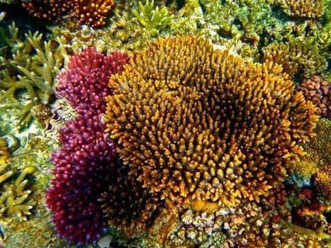 World Heritage Great Barrier Reef System Australia | UNESCO | Scuba Diving Adventures | Scoop.it