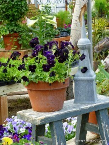 Six Sources of Free Gardening Info | botany | Scoop.it