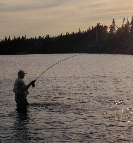 Live Release Can Help Save the Day - Atlantic Salmon Federation   Nova Scotia Fishing   Scoop.it