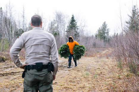 Tree Tipping Generates Cash and Seasonal Woes in Maine | Upsetment | Scoop.it