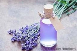 Lavender Benefits, Uses, and Recipes | GMOs & FOOD, WATER & SOIL MATTERS | Scoop.it