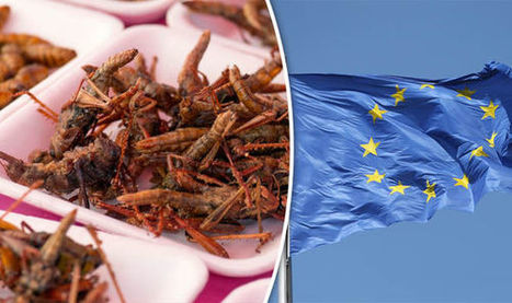 Is the EU planning to feed its growing population on INSECTS? | Entomophagy: Edible Insects and the Future of Food | Scoop.it