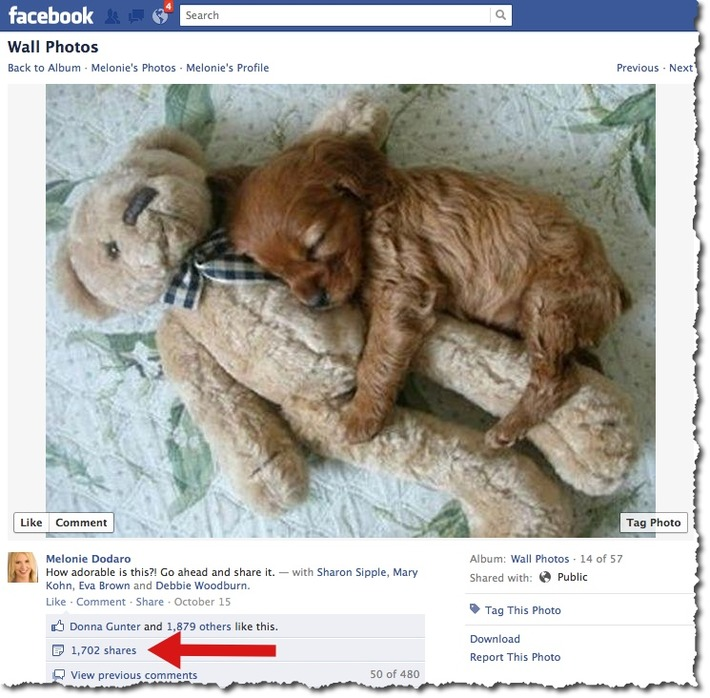 7 Tips To Maximize Shares of Your Facebook Posts   Machinimania   Scoop.it