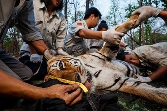 """New Threat to Conservation of  Wildlife: """"Cyberpoaching"""" - Extinction Nears 