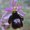 Flora y Fauna, biodiversidad