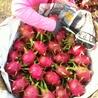 Dragon fresh fruit