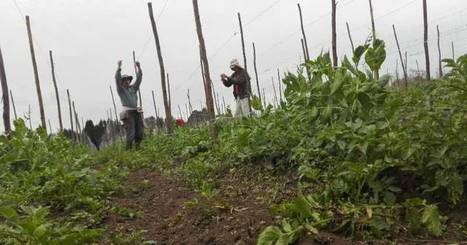 El 0,4% de las fincas concentran más del 67% de la tierra productiva en Colombia | Desarrollo, TIC y educación | Scoop.it