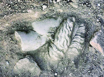 The Archaeology News Network: Sculpture of Artemis unearthed in SW Turkey | HeritageDaily Archaeology News | Scoop.it