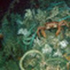 Los mejores buceos del mundo