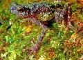In beeld: dieren in actie - Planet Earth - Nieuws - Knack.be | Kosmisch concreet | Scoop.it