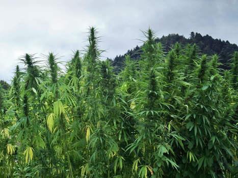 Albania - A Cannabis Paradise in Europe | Voyages et Tourisme | Scoop.it