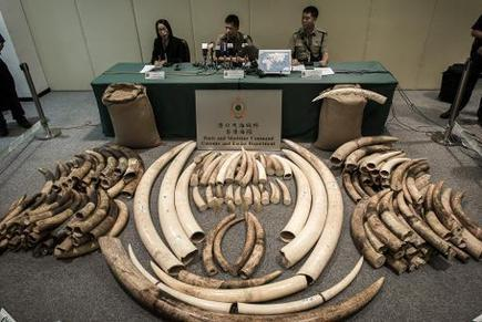 Hong Kong to destroy almost 30 tonnes of ivory | Sustain Our Earth | Scoop.it