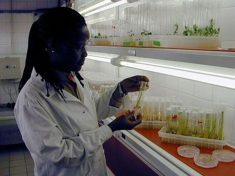 Renewing the Global Commitment to Crop Breeding | World Resources Institute | Sustain Our Earth | Scoop.it
