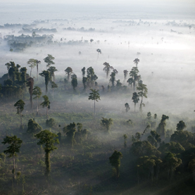Stop Burning Rain Forests for Palm Oil: Scientific American | Corinne | Scoop.it