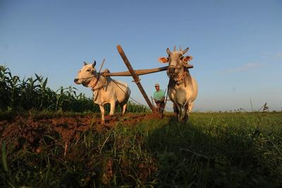 IFC to invest $7.5m in Myanmar Awba rural finance scheme: report