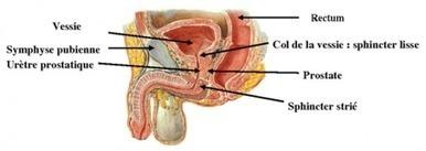 Incontinence urinaire masculine | Actualités Santé | Scoop.it