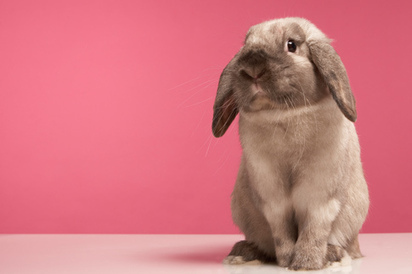 Bunnies, Stinkbugs and Maggots: The Secrets of Empathy   TIME.com   Mediocre Me   Scoop.it