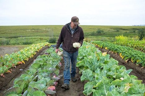 Not So Frost! Are We Underestimating Alaska's Farming Potential? - Organic Connections | Environmental Innovation | Scoop.it