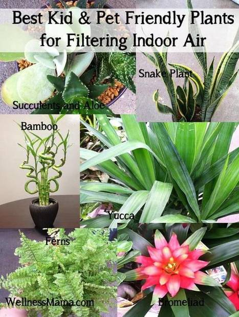 How to Improve Indoor Air Quality Naturally - Wellness Mama | Wellness Life | Scoop.it