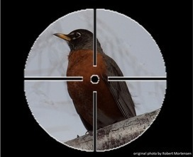 Birding Is Fun!: Bird Ventriloquism | Birds and Birding | Scoop.it