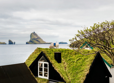This Sheep Is Mapping The Faroe Islands By Wandering Around With A Camera | Human Geography is Everything! | Scoop.it