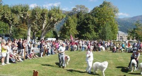 Les chiens de montagne à la fête ce week-end   Revue de presse de la Vallée d'Argelès-gazost   Scoop.it