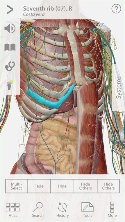 Atlas Of Anatomy Gilroy Pdf 18 | athaspomucir |...