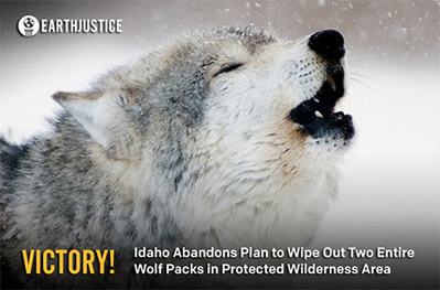 Victory For Idaho Wolves! | nature and life lessons | Scoop.it