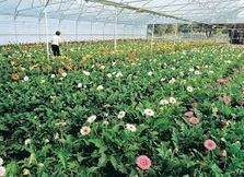 """Producers forced to """"throw away"""" millions of flowers and plants - The Portugal News"""