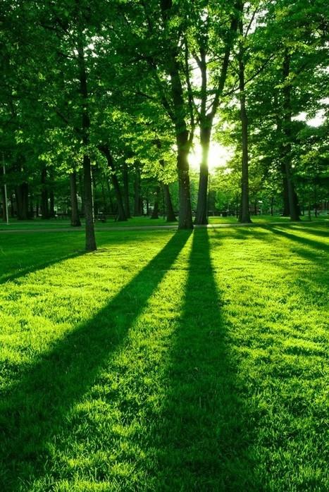 Les panneaux solaires et l'ombre du voisin | Solutions pour l'habitat | Green Habitat | Scoop.it