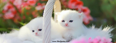 Facebook Cover Image - Cats - TheQuotes.Net | Facebook Cover Photos | Scoop.it