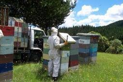 Study a first test of Australian honey's medicinal potential | Sustain Our Earth | Scoop.it