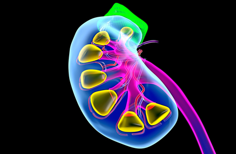 The Science Behind a Crazy 6-Way Kidney Exchange   Global Brain   Scoop.it