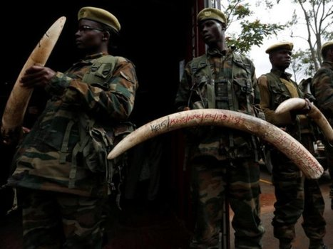 KWS heightens security after slaughter of four rhinos, three elephants | Pachyderm Magazine | Scoop.it