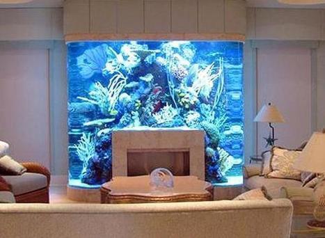 Custom Aquarium In Tropical Fish Aquarists Scoop It