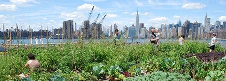 De kracht van stadslandbouw | HappyNews | Positief Nieuws | eetbaar amsterdam | Scoop.it